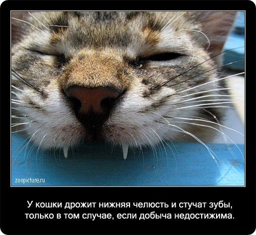Факты о кошках в картинках