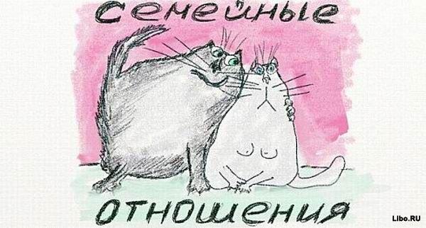 Котейки на все случаи жизни