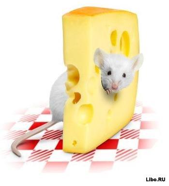 О пользе сыра