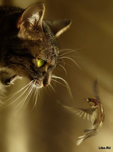 Фото на тему Фото приколы кошками.