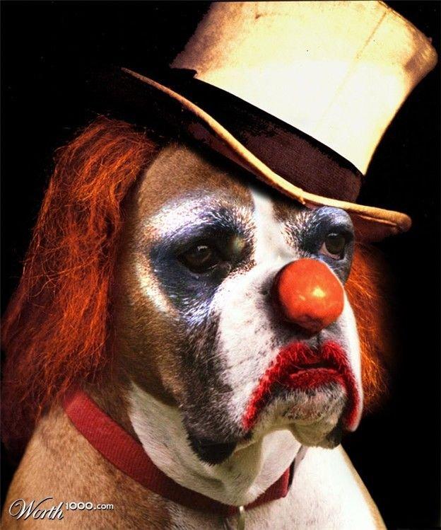 Вся правда о цирке