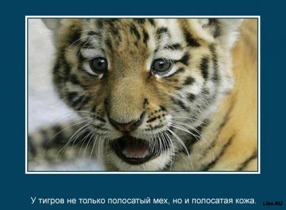 Интересные факты о животных в