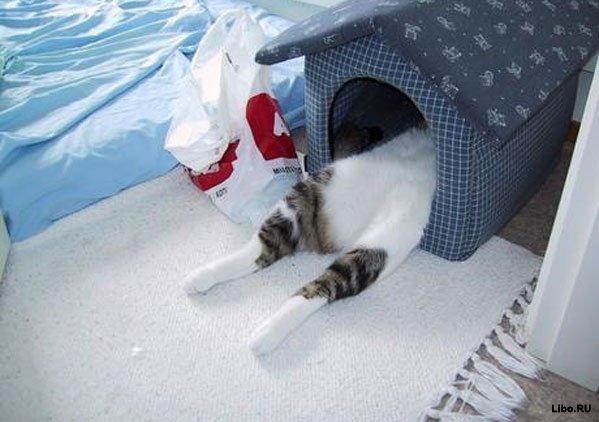 Образец договора с котом