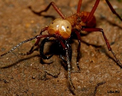 Какие насекомые являются самыми опасными врагами человека?