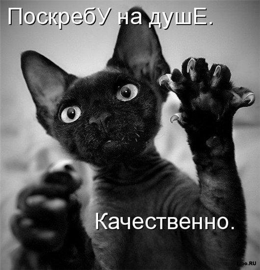 Котовасия ))))