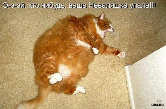 Кото - большая подборка