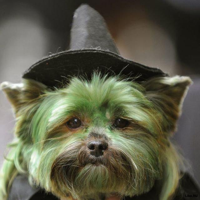 Десятка фактов про отношения людей и собак