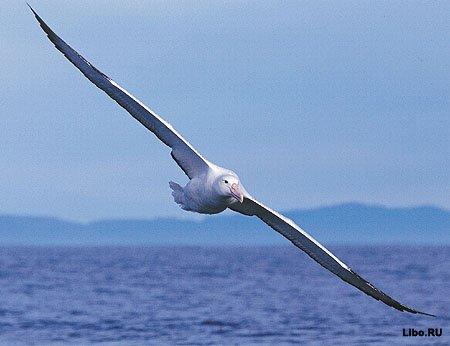 Птичьи рекорды