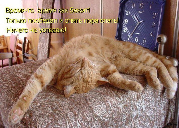 Смешные и просто красивые фотографии кошек (136