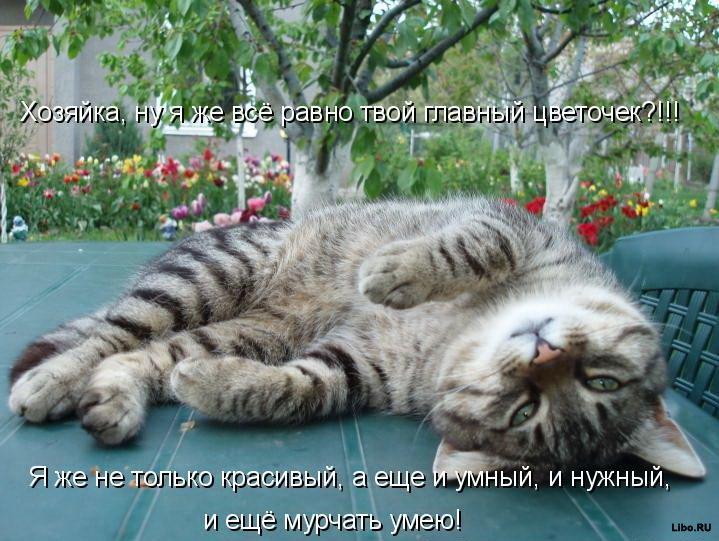 http://www.libo.ru/uploads/posts/2009-12/1261565637_1261242327-prikolnye-koshaki-21.jpg