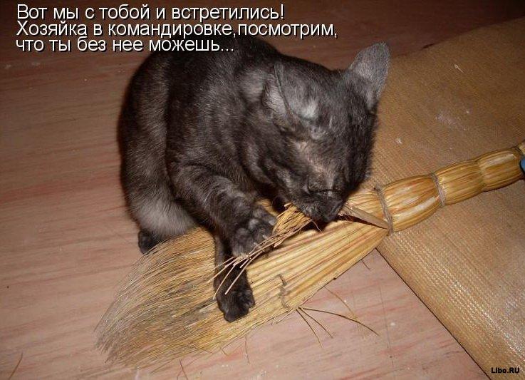 Прикольные кошки
