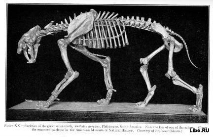 10 самых больших животных ледникового периода