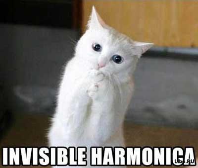 Кошки и невидимые предметы