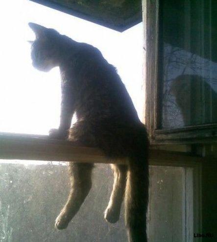 Русский кот сидит на окне в России