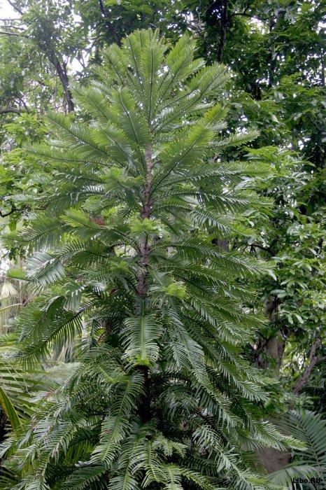 10 удивительных деревьев Земли