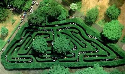 Зеленые лабиринты