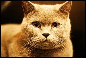 Свод заповедей для домашнего животного, отдаленно похожего на кота