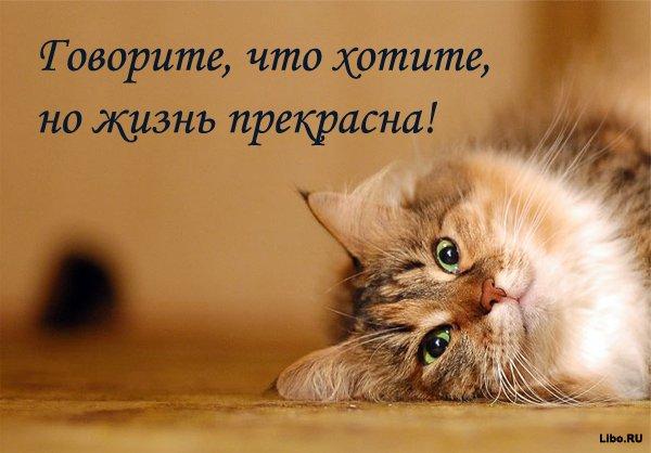 На статусы Вконтакте