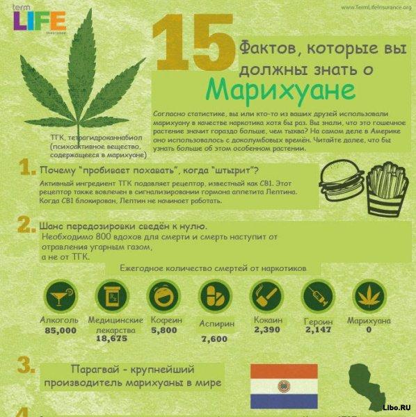 15 фактов о марихуане