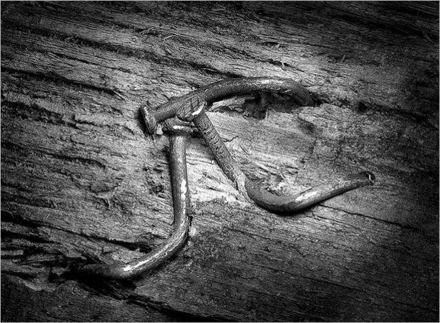 Жизнь гвоздей