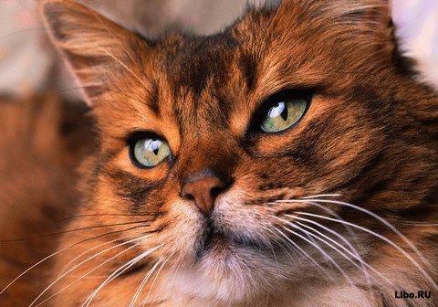 10 страшных фактов о кошках