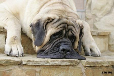 22 вопроса вашей собаки