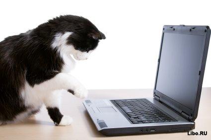 Кошачий форум