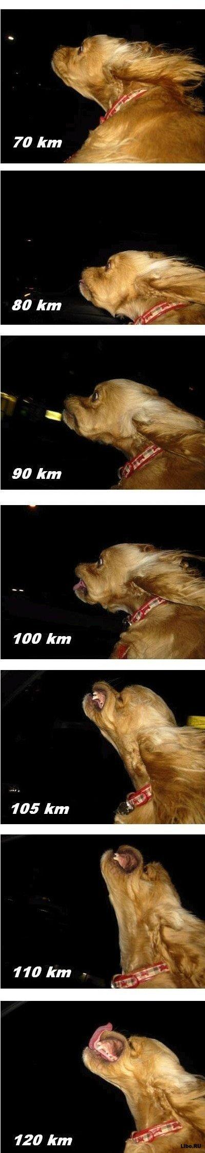 Собака и  скорость