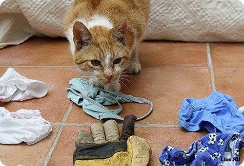 Коты-клептоманы