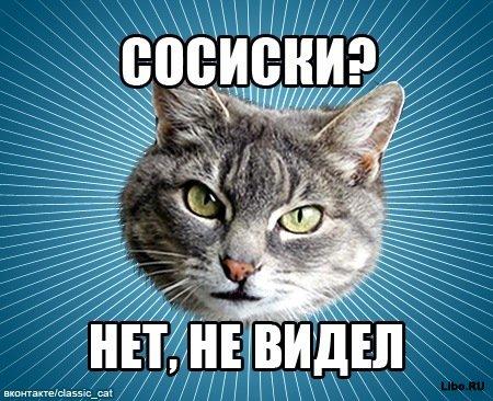Классический кот