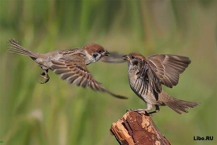 http://www.libo.ru/uploads/posts/2011-09/1316519815_tc5zsxqltah4goid.jpg