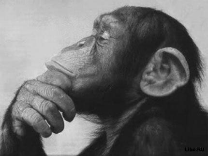 Шесть вещей, которые животные делают так же, как мы