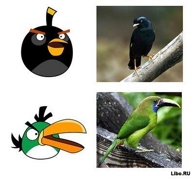 Angry birds в живую