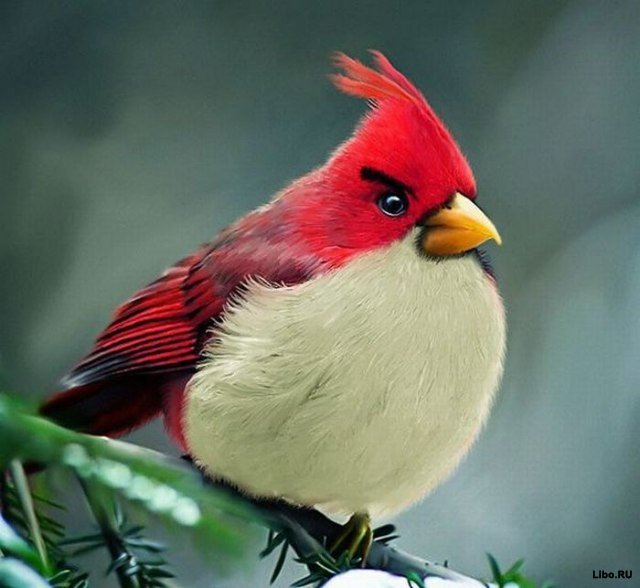 Angry Birds в реальной жизни
