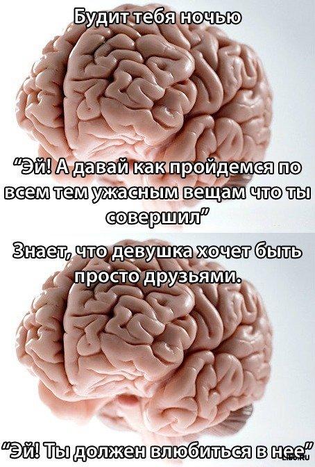 Вся правда о мозге