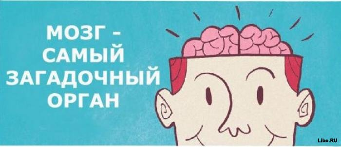 Как работает наш мозг