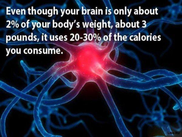 18 фактов о мозге