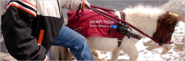 7 удивительных историй о том, как животные выполняют за людей их работу