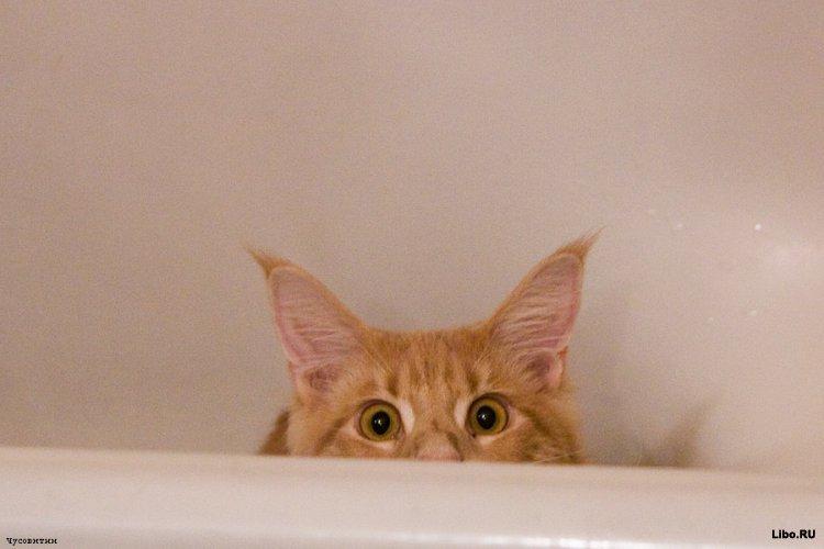 Как мыть кота