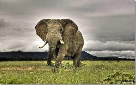 10 самых опасных существ