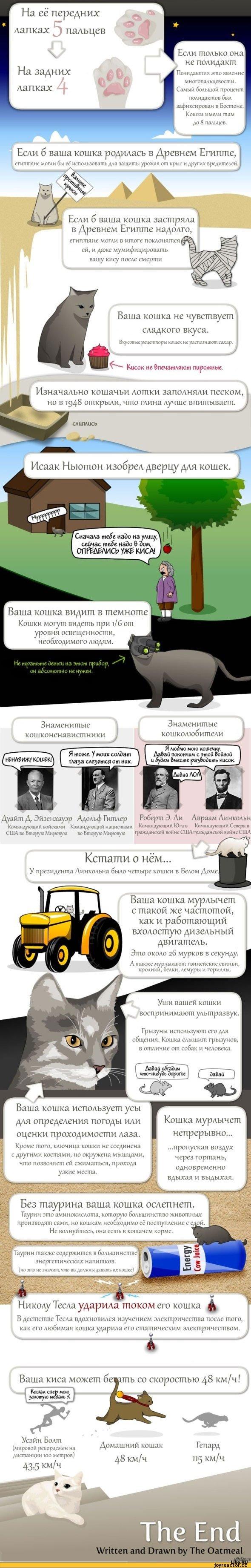 17 фактов о кошках
