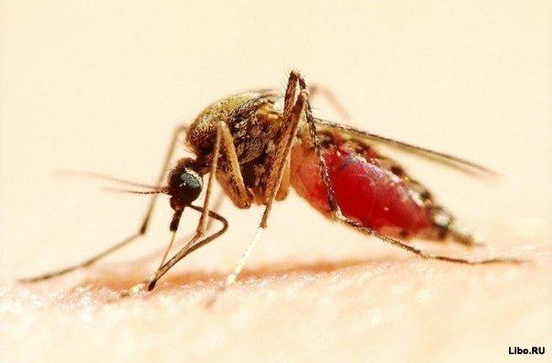 8 ароматов против насекомых