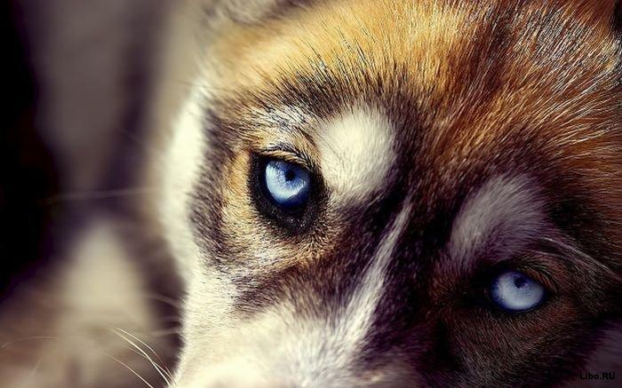 5 удивительных способностей собак